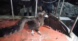 গাইবান্ধায় বিরল প্রজাতির পাখি উদ্ধার