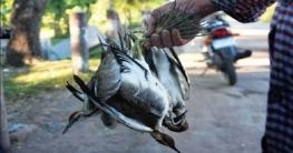 পাইকগাছায় অতিথি পাখি নিধন মহোৎসব