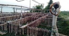 নিষিদ্ধসত্ত্বেও বঙ্গোপসাগরে চলছে নির্বিচারে হাঙর নিধন