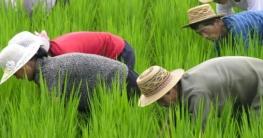 ২০১৮ সালে উ. কোরিয়ায় খাদ্য উৎপাদন কমেছে : জাতিসংঘ