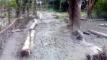 রাস্তা ভাঙ্গা :  চরম দুর্ভোগে এলাকাবাসী