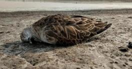 ভারতে সহস্রাধিক পাখির রহস্যজনক মৃত্যু