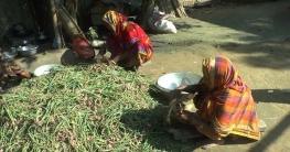 ঝিনাইদহে উঠতে শুরু করেছে মুড়িকাটা পেঁয়াজ