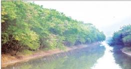 দুই পাশে সবুজের সমারোহ, স্বাবলম্বী স্থানীয় লোকজন