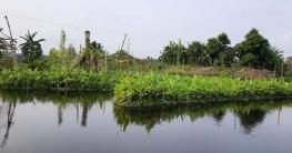 ডুমুরিয়ায় জনপ্রিয় হচ্ছে ভাসমান বেডে সবজি ও মশলা চাষ