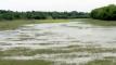 ডুমুরিয়ায় নদী খননের ৪৬ কোটি টাকা জলে